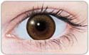 brown wing circle lens